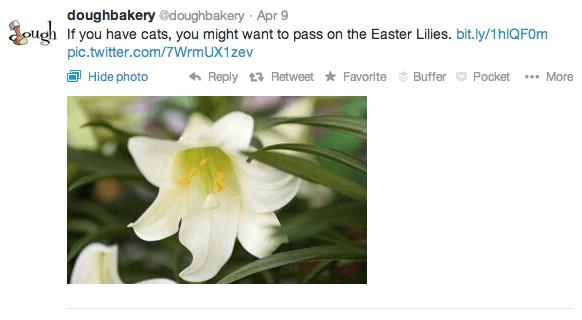 dough bakery twitter cats easter lilies