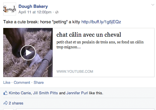video post horse petting cat